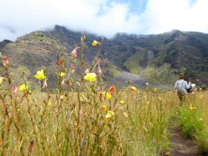 Buffy Elias - A Trip Through Hawaii (2)